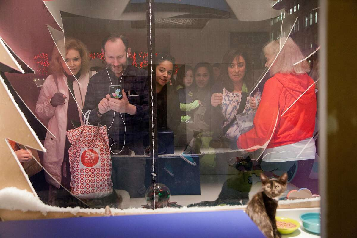 Visitors check out 2-month-old kittens at Macy's in 2015. This year's herd of humans can pick out their favorites by watching videos at the landmark store in San Francisco's Union Square through Jan. 3.
