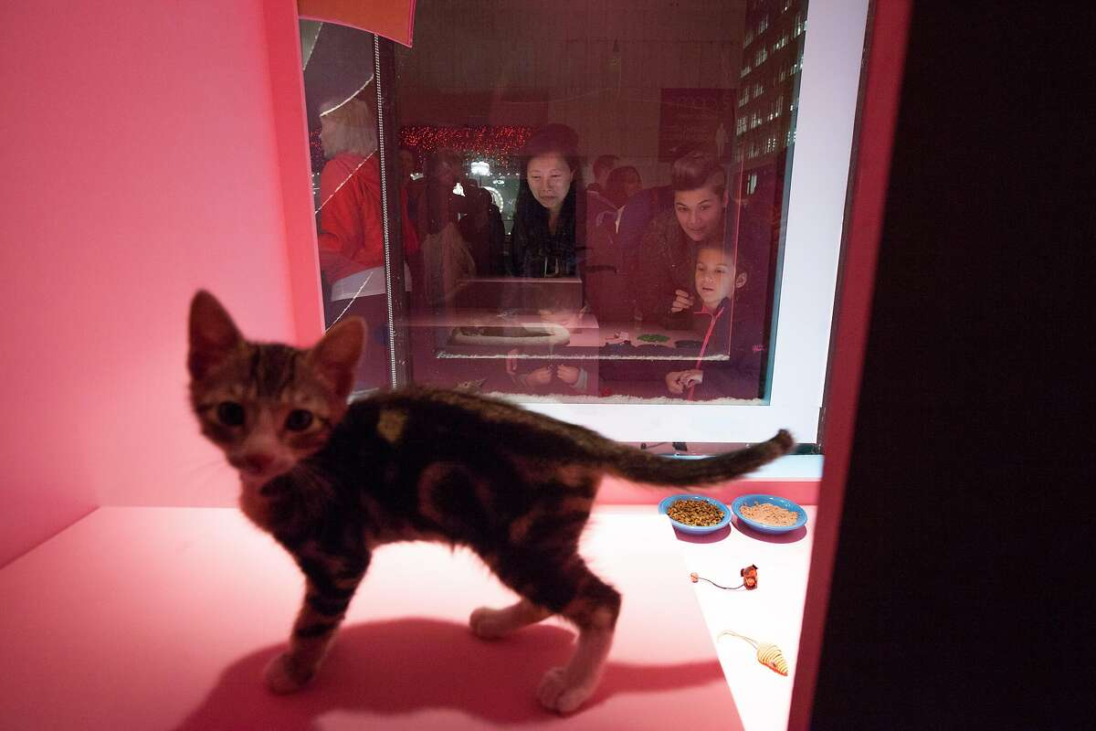 Visitors check out the 2-month-old kittens up for adoption in 2015.