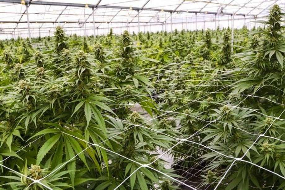 With residents raising concerns about the number of marijuana shops opening within city limits, the Big Rapids Planning Commission is starting to look at options to change regulations in place for these types of businesses. Photo: Pioneer File Photo