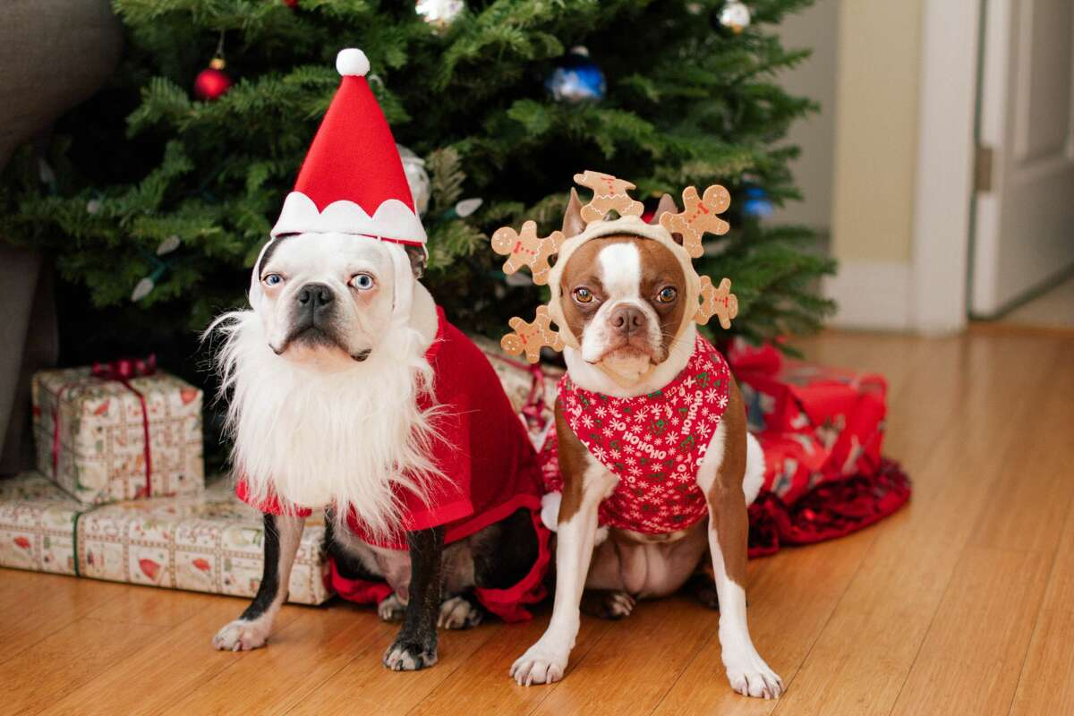 Tails.com created a Christmas carol just for dogs.