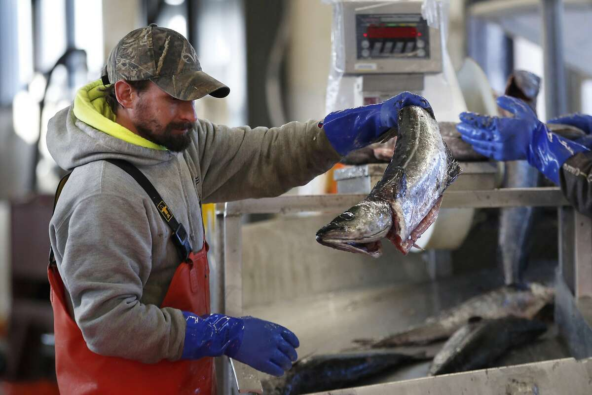 A worker weighed and sorted imported pollack at the Portland Fish Exchange in Portland, Maine, last March.