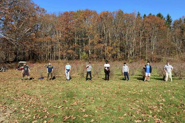 Spectrum/Mask-wearing and social distancing became part of life at Marvelwod School in Kent, including during the school's weekly community service. This group of students worked throughout the fall term tending the Marvelwood Blueberry Orchard.