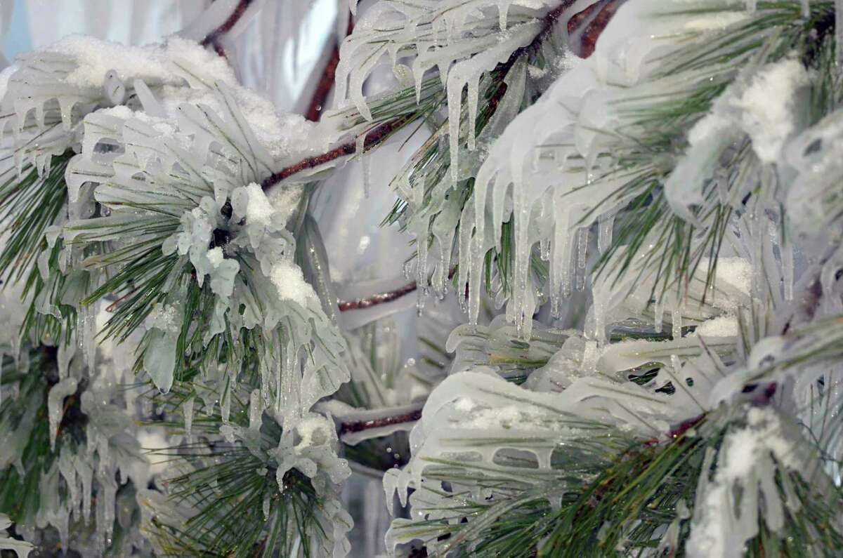 Ice encases the needles of a pine tree. (Courtesy photo/Michigan Department of Natural Resources)