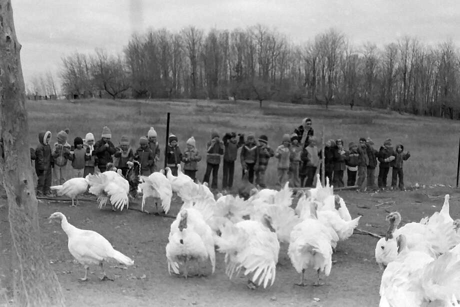 """From the Nov. 24, 1980 issue of the News Advocate, """"First graders from Onekama Consolidated Schools gaze at the gobblers during a recent field trip to the home of Mr. and Mrs. Roman Zupin on Tompke Road. The youngsters visited the farm last week as one of many projects gearing up for Thanksgiving Day."""" (Manistee County Historical Museum photo)"""