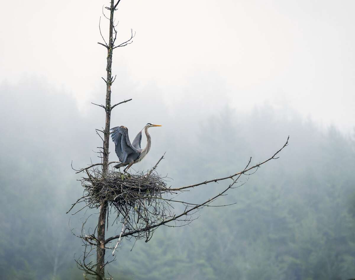 Open Space Institute's new West Mountain property includes a great blue heron rookery.