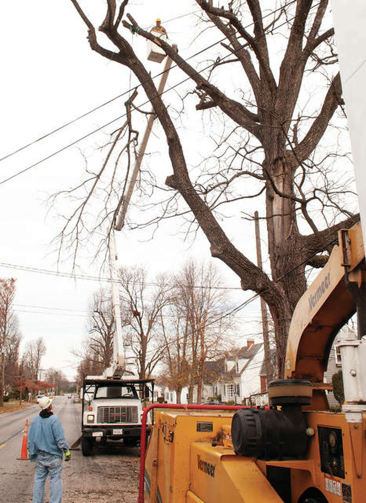 Turner Tree Service employee Randy Still looks up as Eric Christison carefully lowers a large limb, navigating the power lines. The tree limbs were being removed to avoid interferring with powerlines along Webster Avenue in Jacksonville.