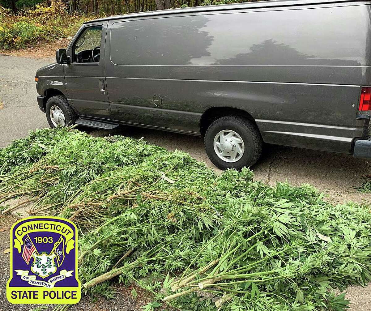 More than 80 marijuana plants were seized during a drug investigation in September 2020, according to state police. Another 15 plants were seized from the home of a Pomfret, Conn., man on Monday, Nov. 23, 2020.