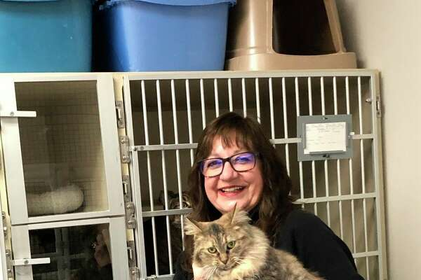 Animal Welfare League of Benzie County President Doreen Carter holds a cat available for adoption at the Benzie County Animal Shelter. About 15 cats are currently awaiting their forever homes at the shelter, and the annual pet food drive helps feed them. (Courtesy Photo)