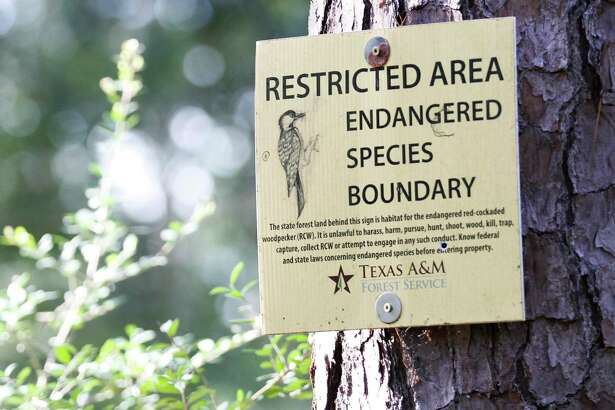 A sign notifies visitors of a restricted endangered species boundary for the red-cockaded woodpecker in William Goodrich Jones State Forest, Tuesday, July 2, 2019, in Conroe.