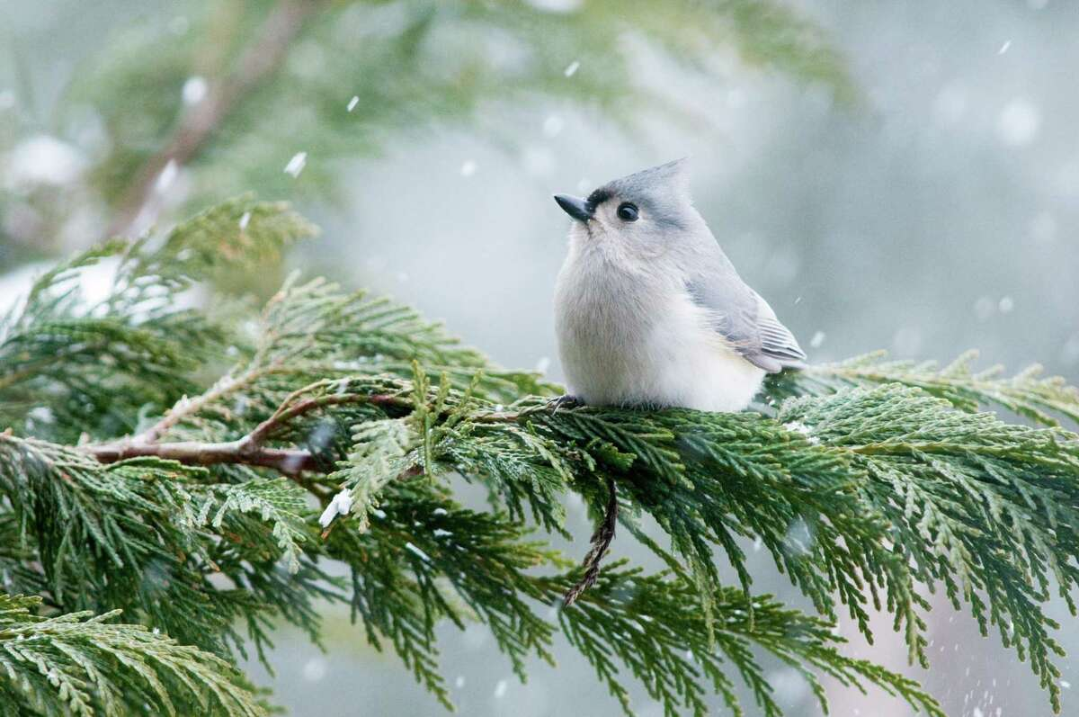 The Sharon Audubon Center has scheduled a variety of activities for the month of December.