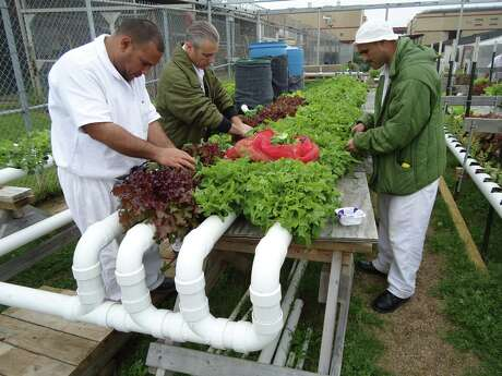 The aquaponics farm at the Michael Unit is a living classroom where students acquire skills and certifications that will help them land better jobs on the outside. This photo was taken before the pandemic.