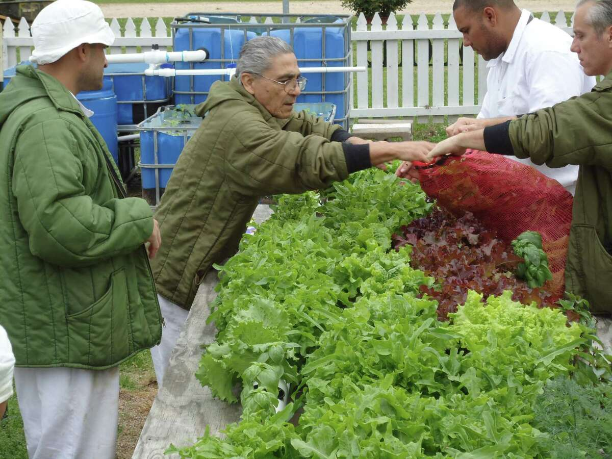 The aquaponics farm at the Michael Unit stands out as a model for sustainable and locally-grown food that could be replicated in other institutions around the world. This photo was taken before the pandemic.