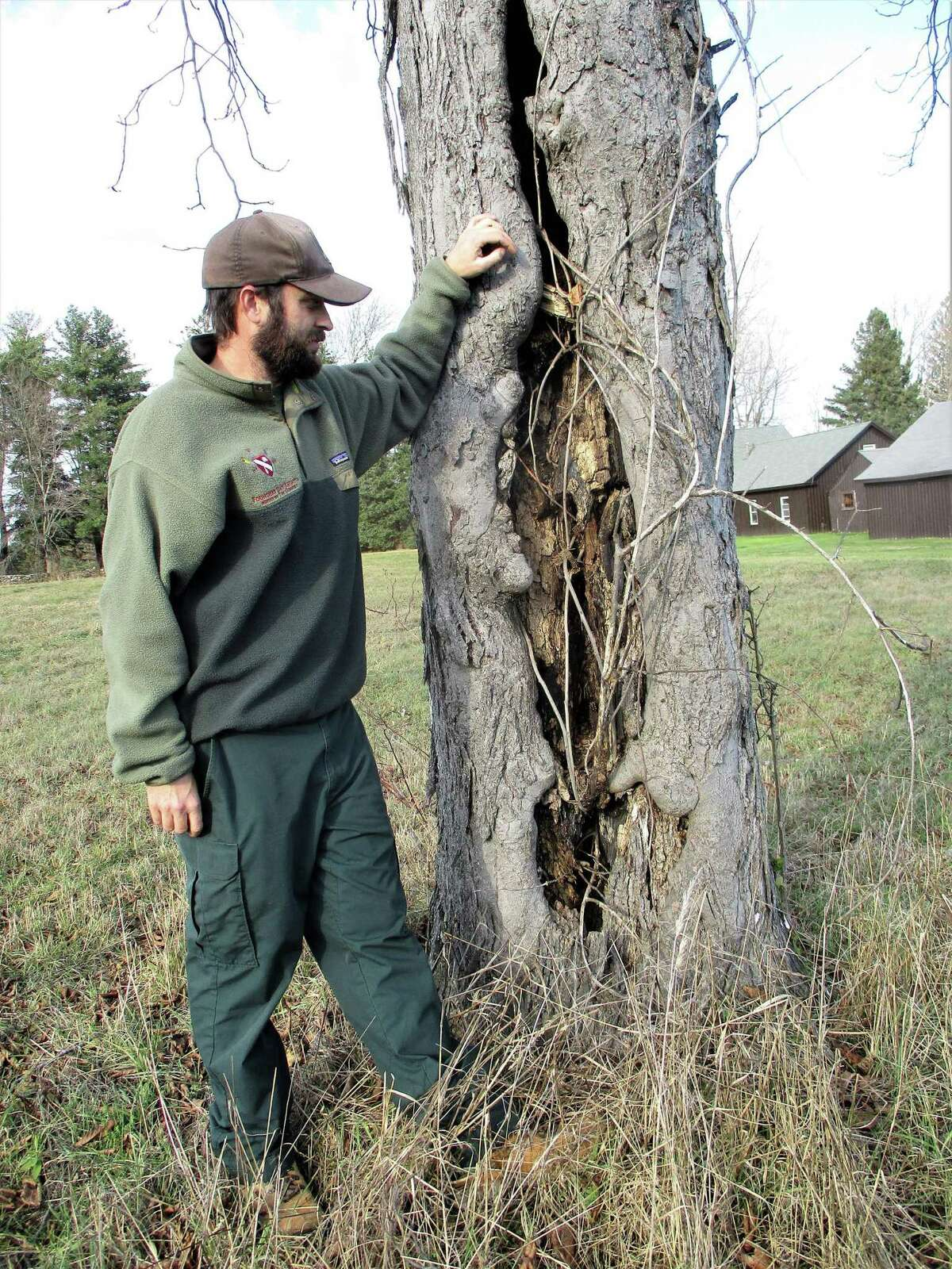 """Jared Rice explains the internal rot and """"squirrel holes"""" that have overtaken this 40-year-old Hemlock at Topsmead."""