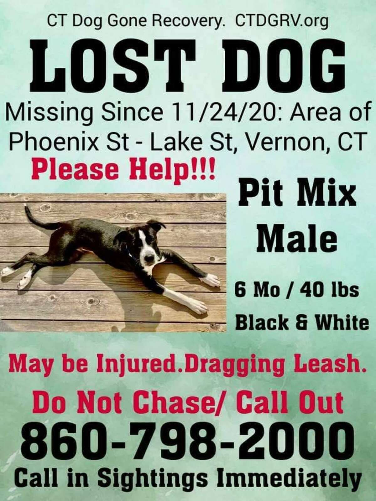 Ollie was last seen on Phoenix Street in Vernon, Conn., on Tuesday, Nov. 24, 2020.