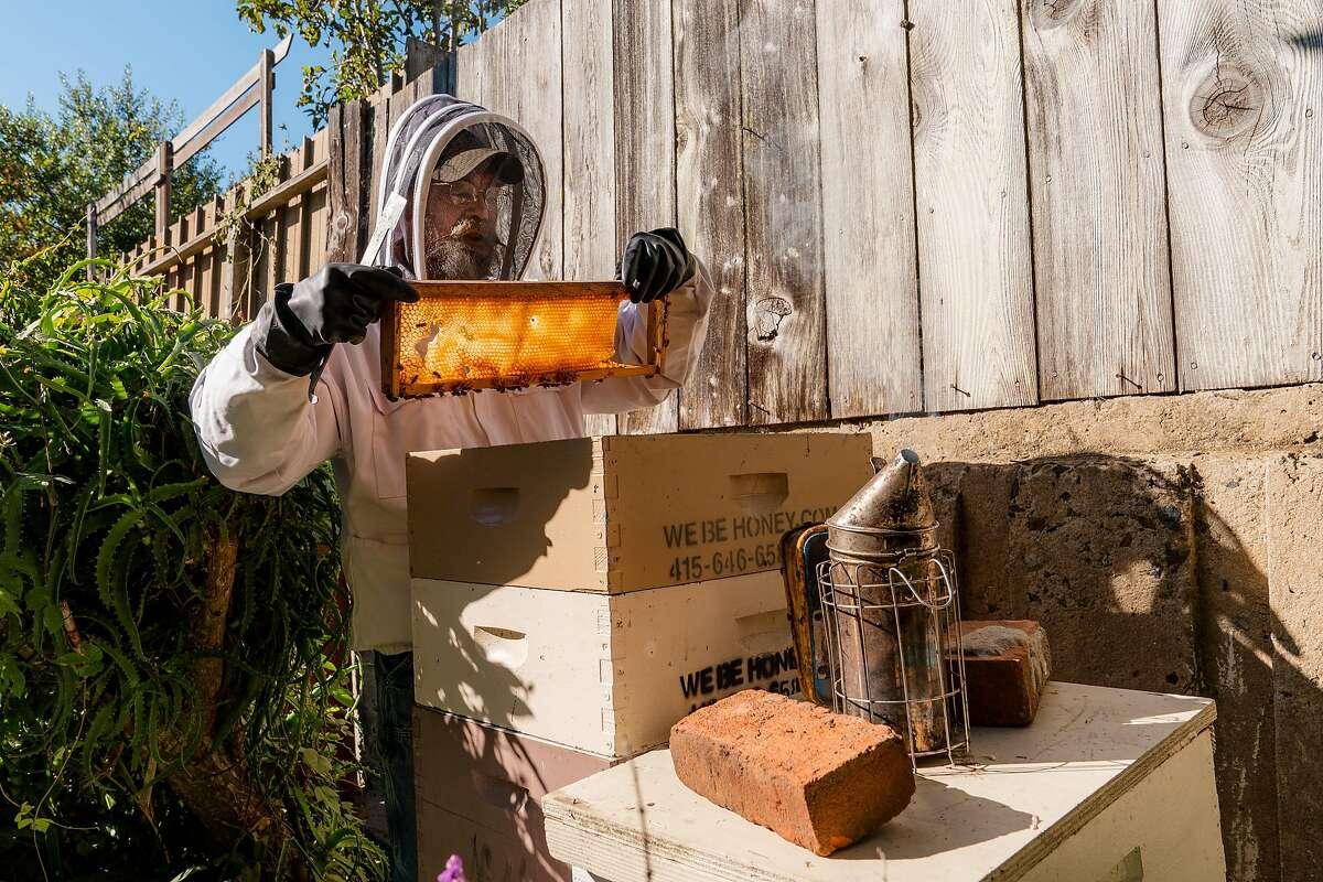 Jeffrey MacMullen inspects a honeycomb in San Francisco, Calif., on Thursday, November 26, 2020.
