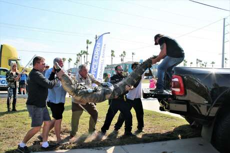 Port Aransas officials had to call in experts to remove a 10-foot alligator that has been lurking in the city since the summer after residents continued to throw glass and other items at it, according to the city's animal control officer Richard Gleason.