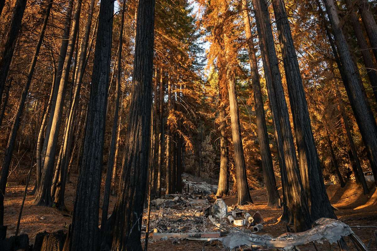 The August wildfires caused extensive damage at Big Basin Redwoods State Park in Santa Cruz County.