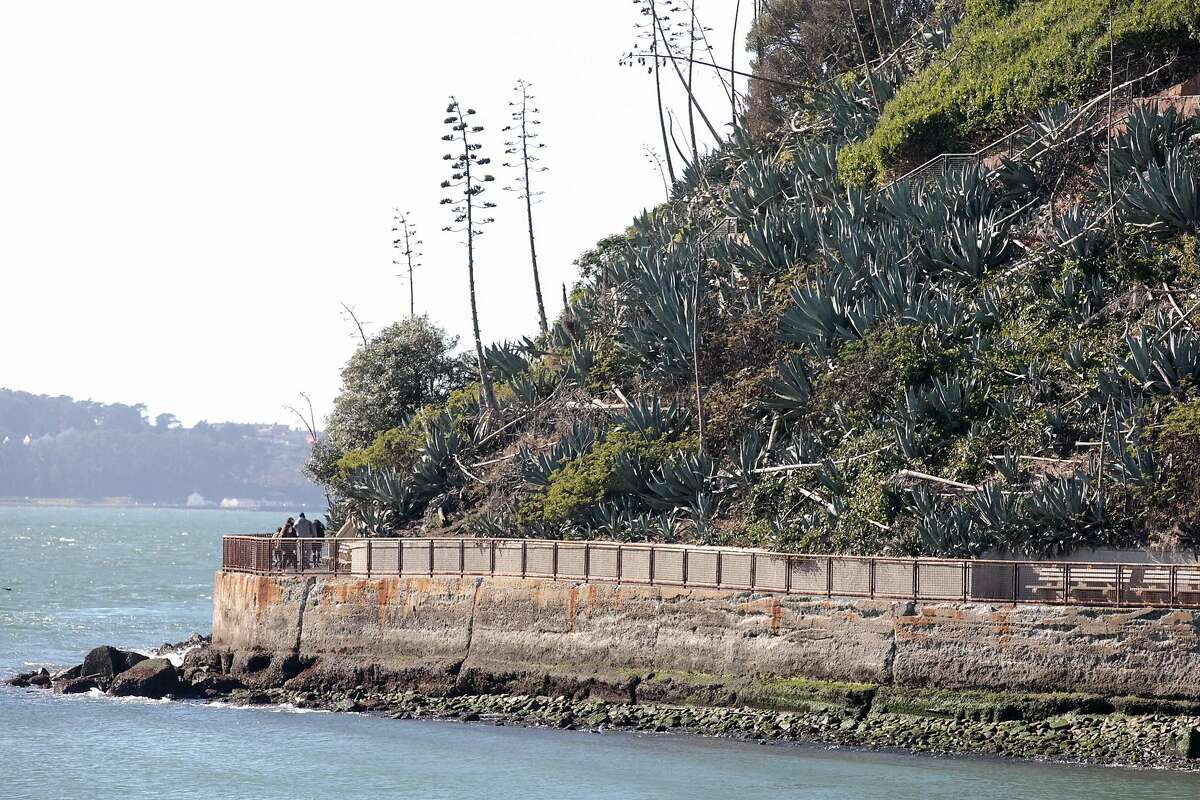 Visitors walk through the aloe garden on Alcatraz Island in San Francisco on Nov. 23, 2020. For the past 17 years, the National Park Service and Golden Gate National Parks Conservancy have been uncovering and rehabilitating many gardens on the island that were created and maintained during its time as a military base and later a prison.