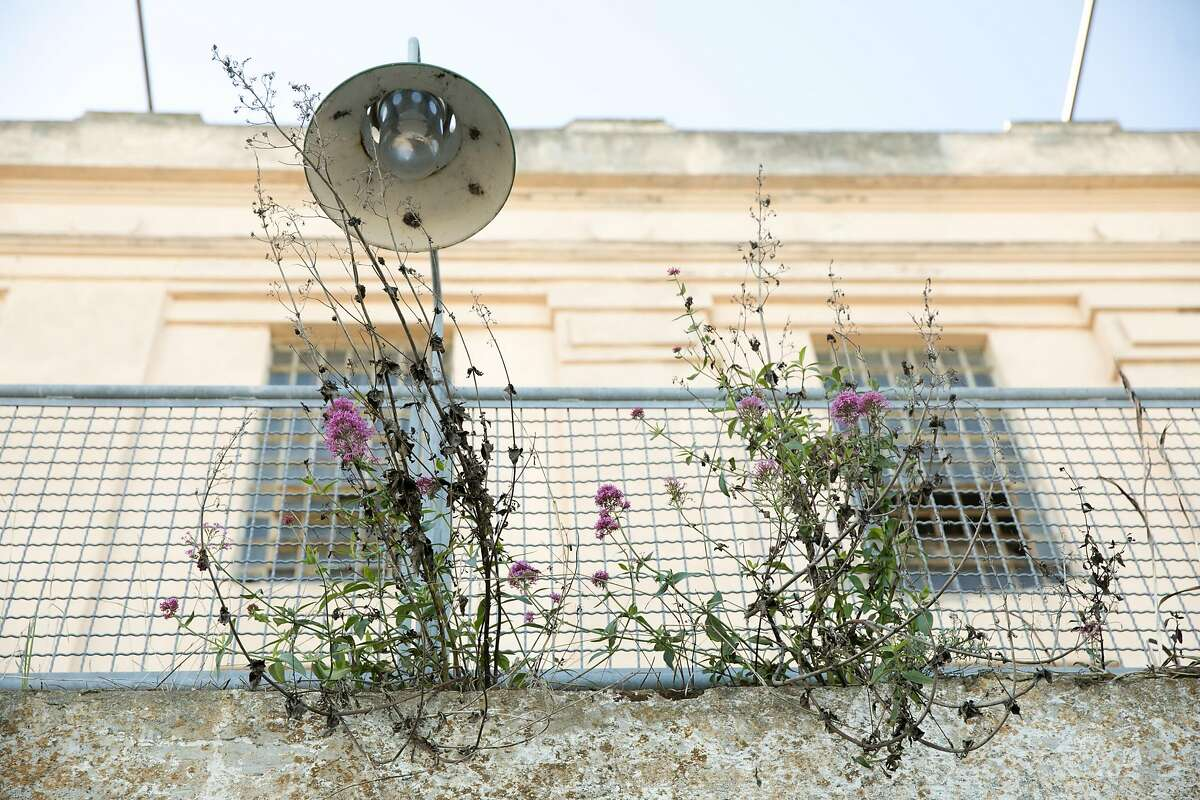Flowers sprout out among the concrete on Alcatraz Island in San Francisco on Nov. 23, 2020.