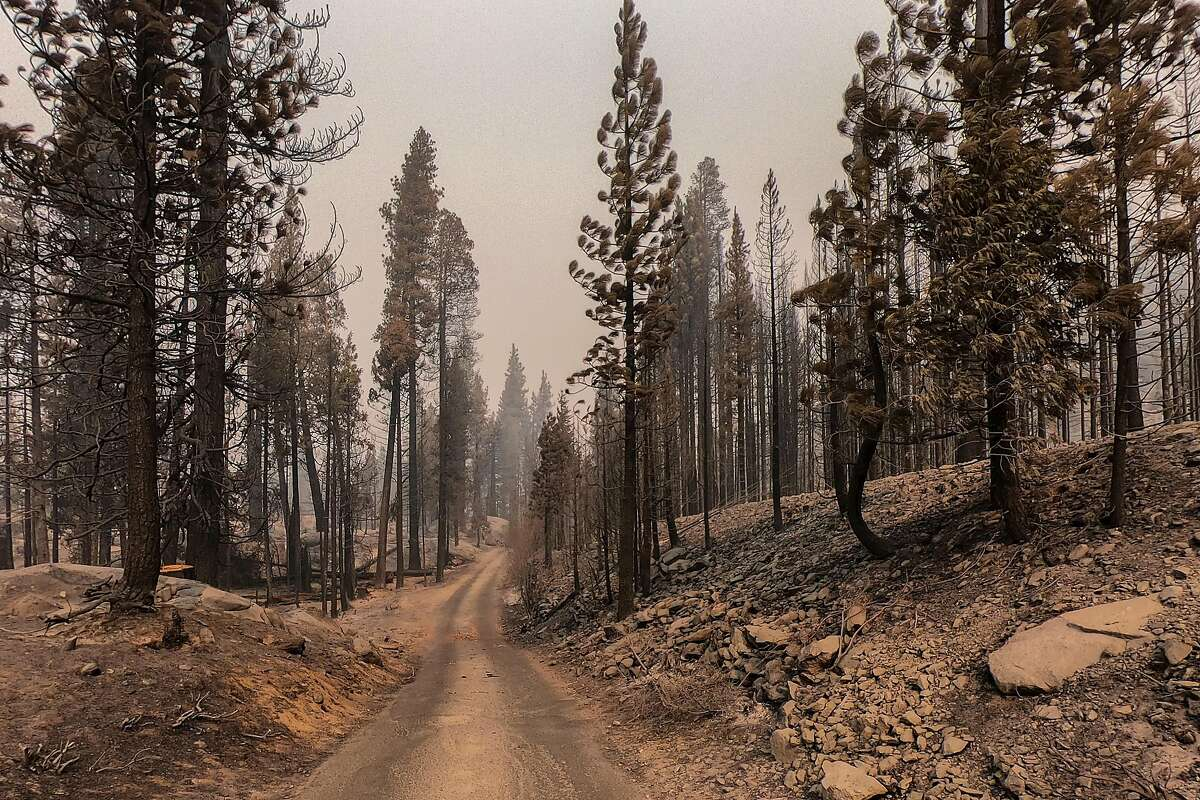 An area of the Sierra National Forest in California, damaged by the Creek Fire, on Oct. 21, 2020. Fires are making California's air more dangerous. How much that hurts depends largely on where you live and how much money your family has. (Chang W. Lee/The New York Times)