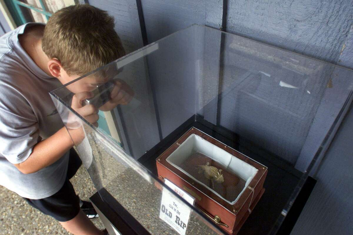Travis Ford, 10, from Abilene, Texas, takes a photograph of Old Rip, on July 15 2002, in Arlington. The town of Eastland, about 90 miles west of Fort Worth, is famous for the horny toad that was placed in a cornerstone of a new courthouse building in 1897 and removed still alive when the courthouse was being rebuilt in 1928. It was taken on a tour of the country, including a trip to visit President Cooolidge.