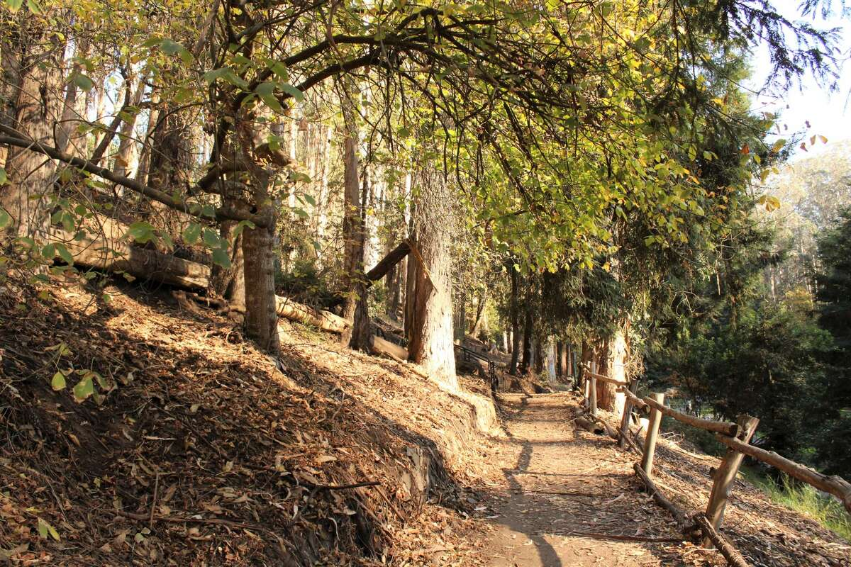 Secluded trails wind through the park. During concerts, these trails are much busier as they allow concertgoers to find seats in the valley's natural amphitheatre.