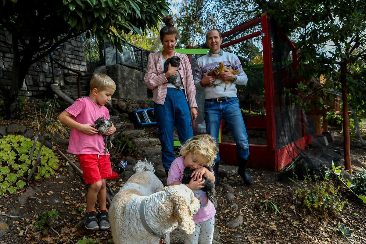 """The Griffith family poses for a photo with their five chickens, that were named after """"Frozen"""" characters, at their home on Saturday, November 21, 2020, in Piedmont, Calif. From left to right: Jamie Griffith, 6, holds Elsa, their dog Jasper, Amy Griffith holds Sven, Poppy, 2, holds Christophe, and Russ Griffith holds Anna and Olaf. Wire mesh makers are sold out of fencing. Chick suppliers can't keep fluffy baby birds in stock. During the pandemic, more people have turned to urban chicken keeping, building backyard coops and buying birds to start their flocks. Amy Griffith is one of those new chicken keepers."""
