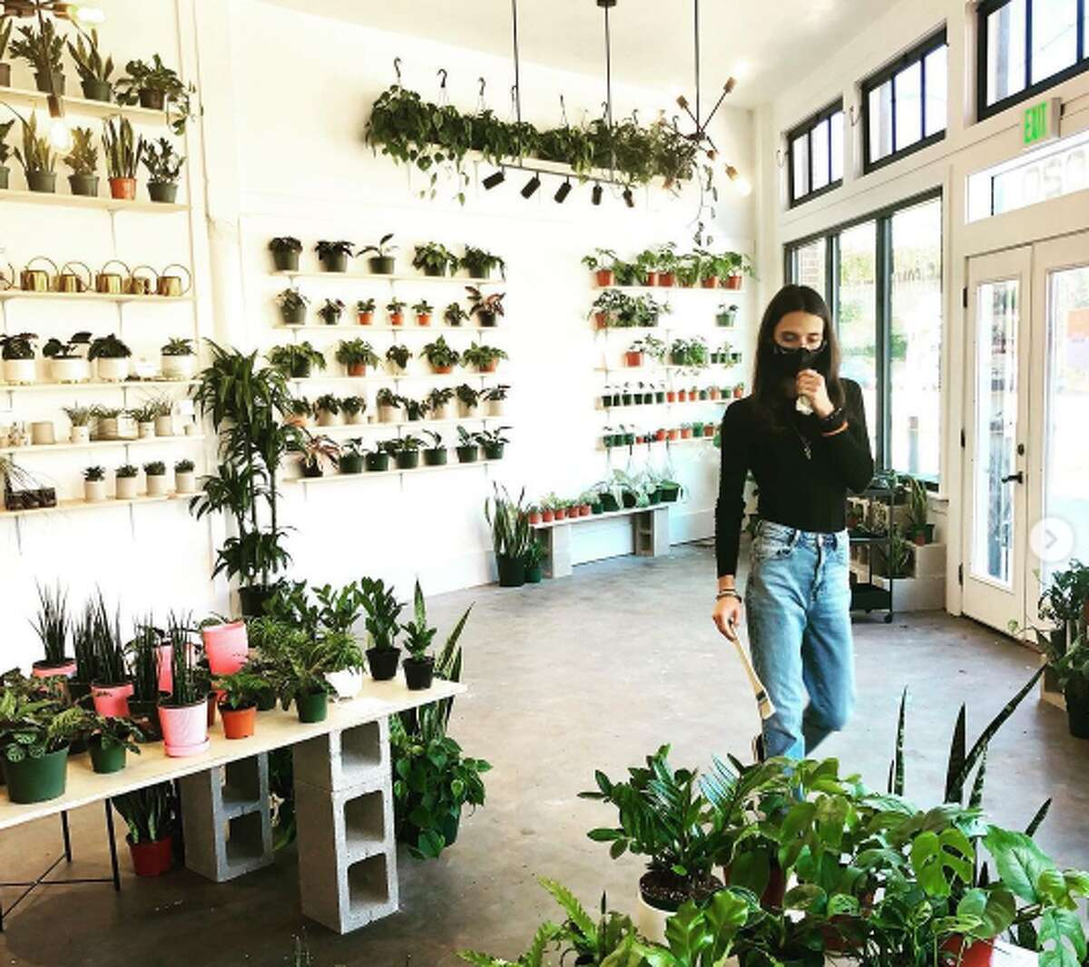 """At the shop, plant lovers can find a range of specimens like alocasia black velvet, Monstera Peru, Sansevieria shark fin, and Rhaphidophora tetrasperma. Additionally, the shop has lifestyle and home Texas products, such as ornaments by Ritual Pottery (a local business), body products from a Houston company, and candles from an Austin establishment. Aditya said she not only wanted to make the space about plants but also about local artists and a place where the community can come together and feel relaxed, even for those who don't leave with a product. """"I told my team they (guests) should feel loved and welcomed,"""" she said. """"Sharing the good vibes of the plants and being in that space. Not feeling pressured or guilty that you came in and left and didn't get anything. Eventually, I hope you get a plant because they are awesome."""""""