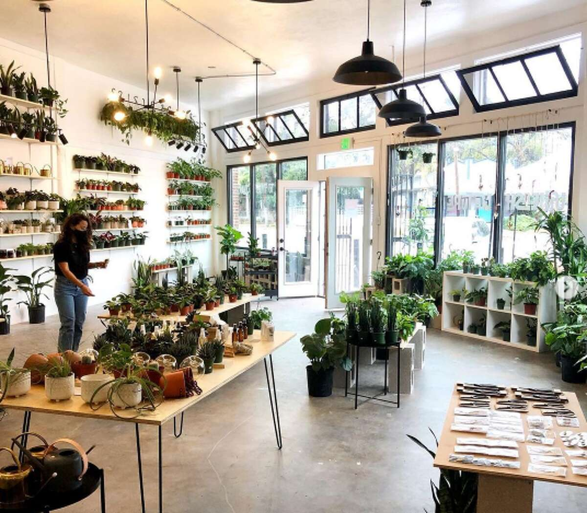 For years, Aditya has been collecting rare house plants like alocasia silver dragon and philodendron Micans, often traveling to other cities and states to find her plants. After realizing other locals might share the same difficulties, Aditya launched Plant Shoppe - a nursery where you can find specialty plants, like tropical, rainforest plants, that are grown in ethical and sustainable greenhouses.