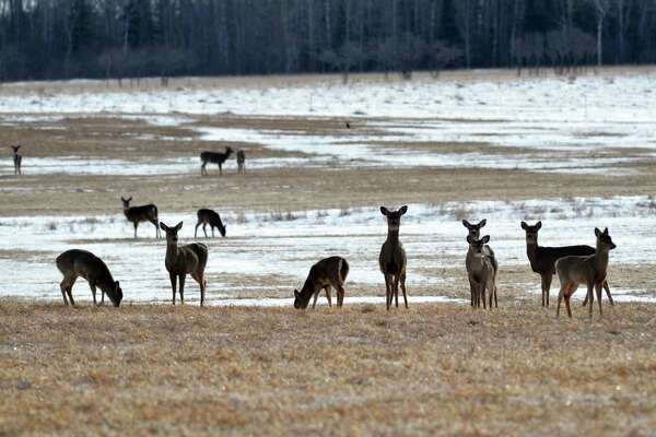 An overabundance of deer can mean fewer resources for them, said local biologist Steve Griffith.