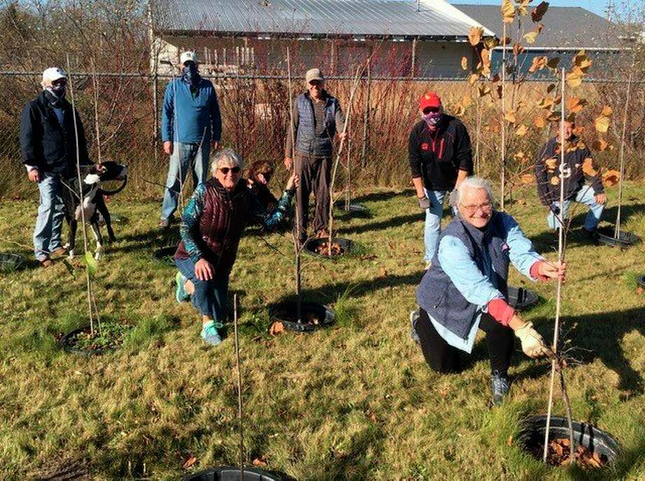 Members of the Frankfort Tree Board care for the city's nursery with the help ofJim Grabowski. (Courtesy Photo)