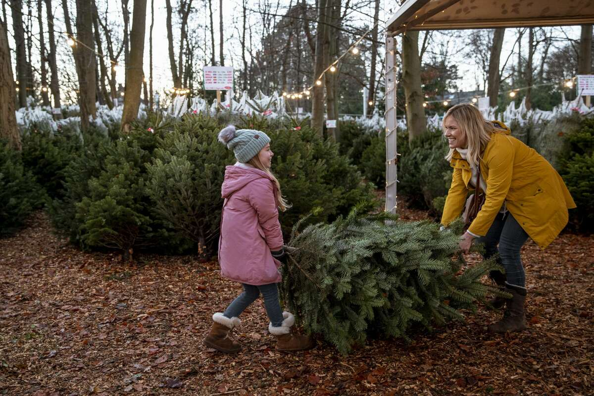 Settled in Issaquah and just 30 minutes from downtown Seattle, Trinity Tree Farm recently received a delivery of fresh pre-cut trees up to nine feet, and will continue to receive more trees in the coming days. They're open Monday-Friday, 10 a.m.-6 p.m.; Saturday-Sunday, 8 a.m.-6 p.m. No appointment or reservations are required to visit the farm during these times, though they do encourage weekday visits and ask you to bring your masks, too!