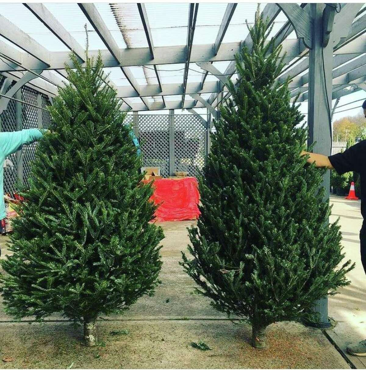 Ten percent of sales proceeds at Nielsen's Florist on Thursday will go to benefit Darien EMS Post 53. Also, Posties will help with Christmas tree sales on Thursday from 3 to 5 p.m. with 50 percent of cash tips to go to Post 53.
