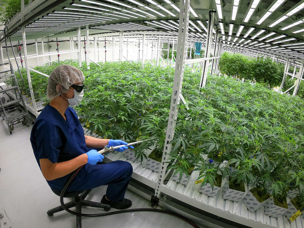 In April 2019, Lume Cannabis Company started the wave with a growing and processing facility in Evart. Now, after a year in operation, the company is in the process of expanding their facility. They were recently approved for a Class C grow license and an excess grower license.