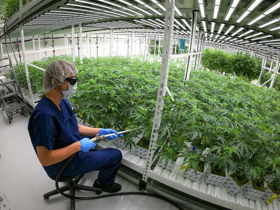 In April 2019, Lume Cannabis Company started the wave with a growing and processing facility in Evart. Now, after a year in operation, the company is in the process of expanding their facility. They were recently approved for a Class C grow license and an excess grower license. Photo: Photo Courtesy Of Lume Cannabis Company