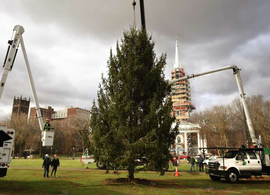 A replacement Christmas tree for the one felled during a recent storm is  lowered into place with a crane on the New Haven Green Wednesday, December 2, 2020. Photo: Brian A. Pounds / Hearst Connecticut Media / Connecticut Post