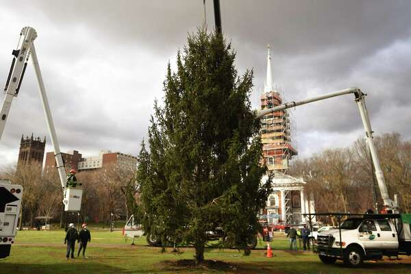 A replacement Christmas tree for the one felled during a recent storm is lowered into place with a crane on the New Haven Green Wednesday, December 2, 2020.