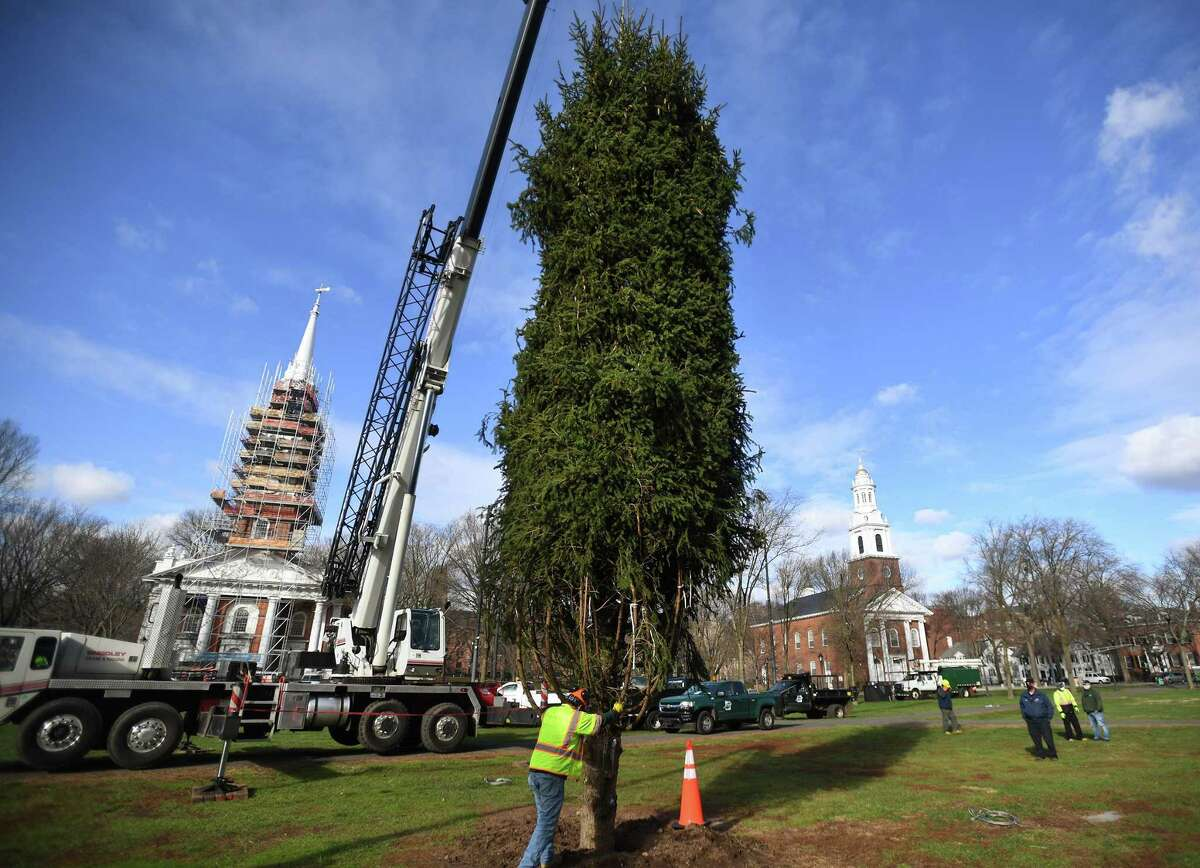 A replacement Christmas tree for the one felled during a recent storm in lowered into place with a crane on the New Haven Green Wednesday, December 2, 2020.