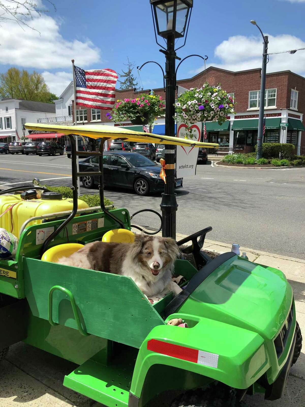 Biscuit, resting quietly in her favorite spot on the passenger seat of the Ridgefield flower lady's watering cart.