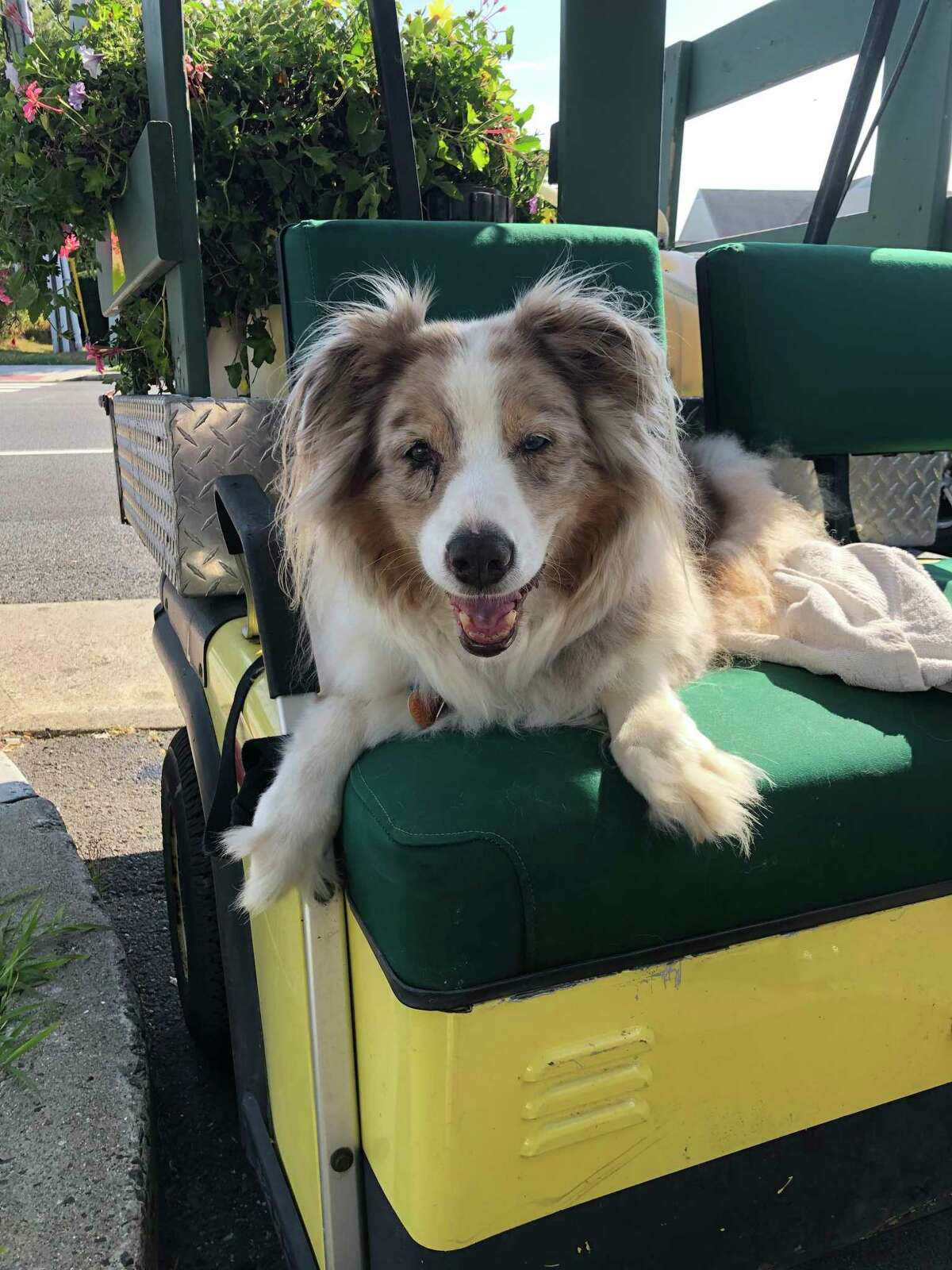 Biscuit, as always, waiting patiently. Moore said that her family has a puppy, a male Australian Shepherd named Bauer, with