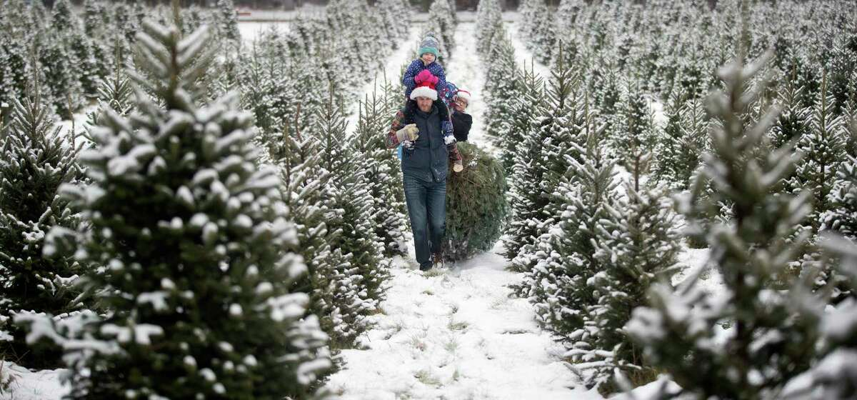 A family drags the Christmas tree they cut down at a tree farm in Minnesota. Locally,Duddles Tree Farm in Reed CityandGrant Family Farms in Rodney offer fresh-cut and choose-and-cut Christmas trees. (Photo By Jerry Holt/Star Tribune via Getty Images)