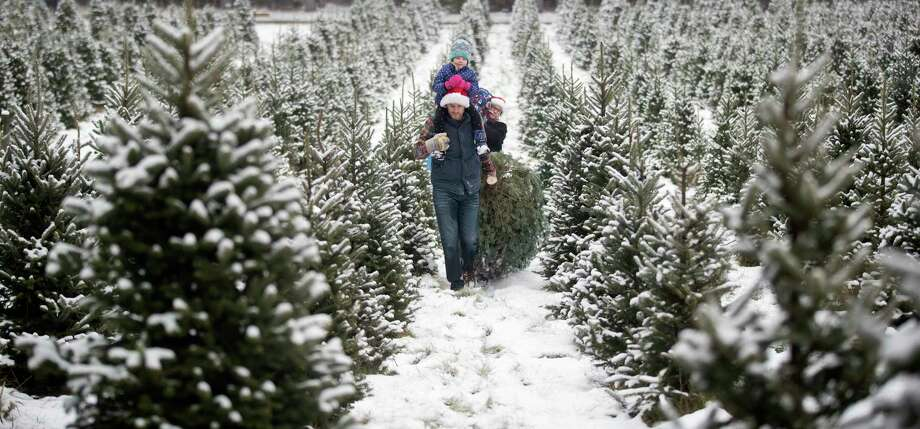 A family drags the Christmas tree they cut down at a tree farm in Minnesota. Locally,Duddles Tree Farm in Reed CityandGrant Family Farms in Rodney offer fresh-cut and choose-and-cut Christmas trees. (Photo By Jerry Holt/Star Tribune via Getty Images) / Star Tribune