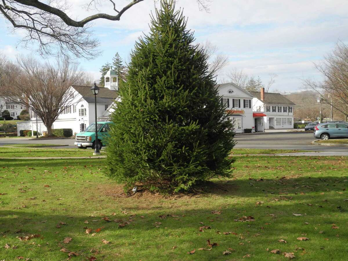 A new evergreen tree, to replace the one that died over the summer, was planted on the town green in Wilton Center on Nov. 21. It will be lit in a virtual event that may be viewed on Dec. 4.
