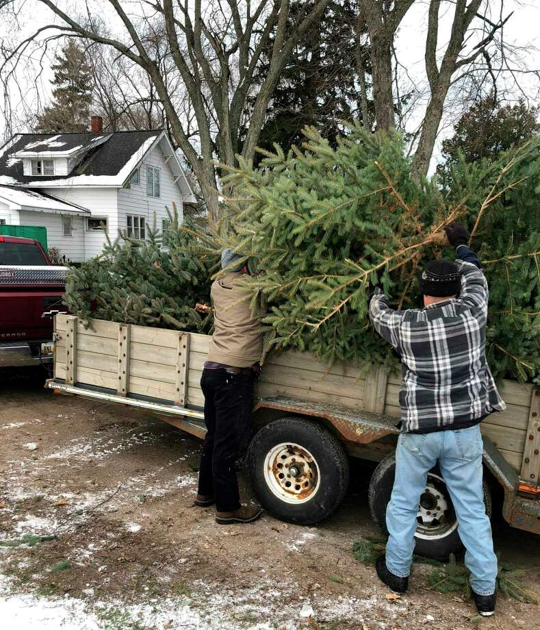 FiveCAP will be distributing free Christmas trees starting at 2 p.m. on Saturday in Manistee. The trees are donated byBlue Earth Tree Farm in Ludington. (Courtesy photo)