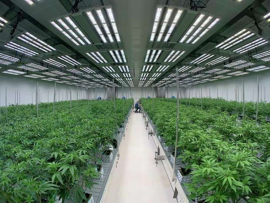 Lume Cannabis Company recently received approval for additional grow licenses from the Evart city council, part of their planned expansion of the cultivation facility in Evart. (Photo courtesy of Lume)