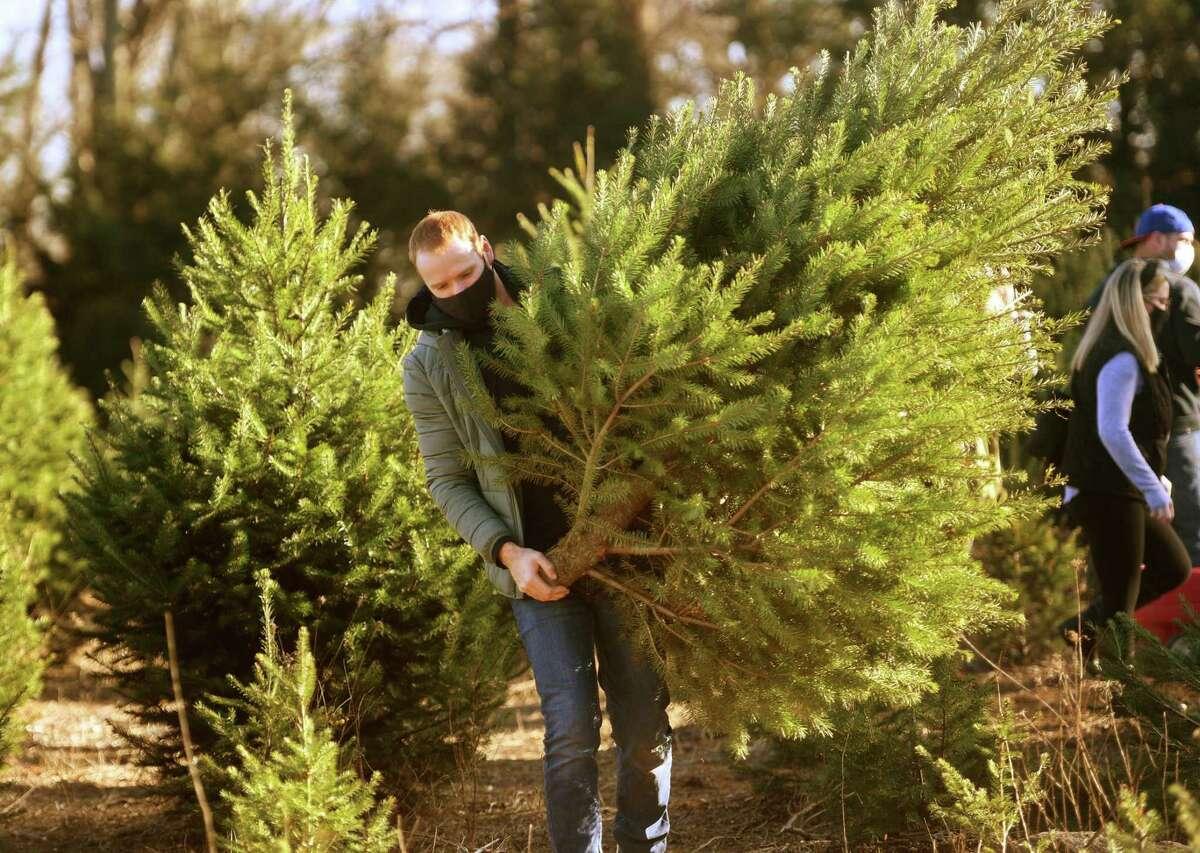 Patrick Bonnar, from the Bronx, NY, harvests his own Christmas tree at Jones Tree Farm.
