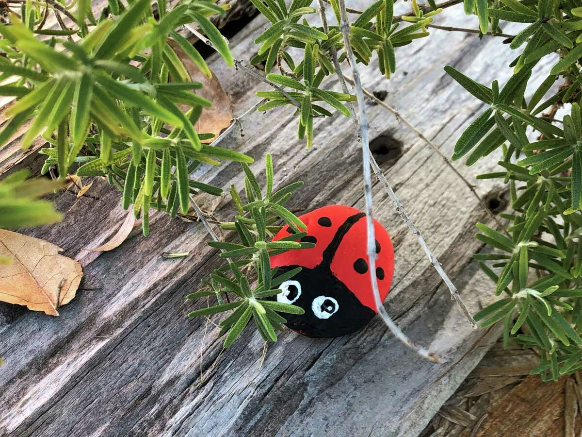 Here is a ladybug craft inspired by the San Antonio Rocks, a local rock painting group.