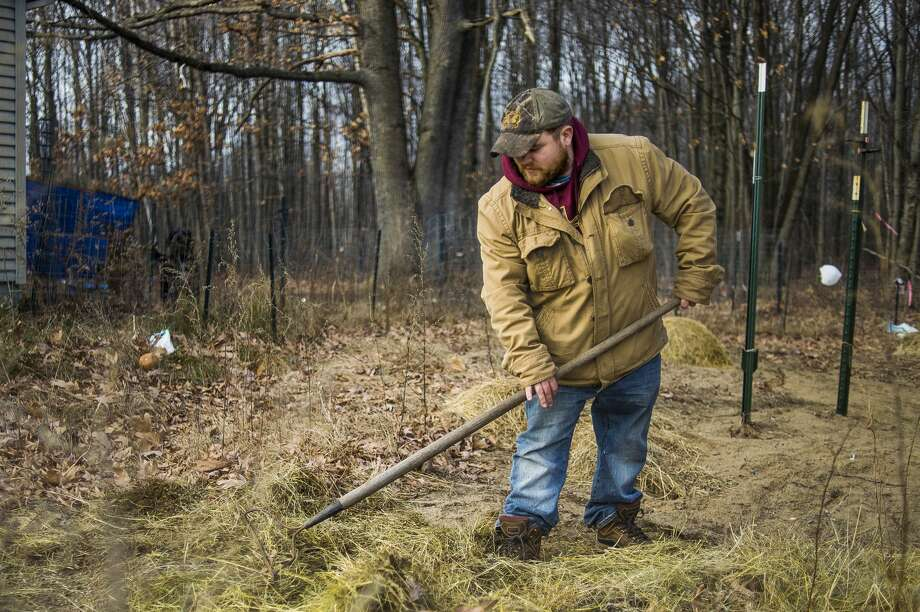 Aaron Zeiler spreads straw over his home garden to prepare it for the winter Friday, Dec. 4, 2020 in Shepherd. Zeiler says that much of the food he and his wife have eaten this past year was grown in the garden. (Katy Kildee/kkildee@mdn.net) Photo: (Katy Kildee/kkildee@mdn.net)