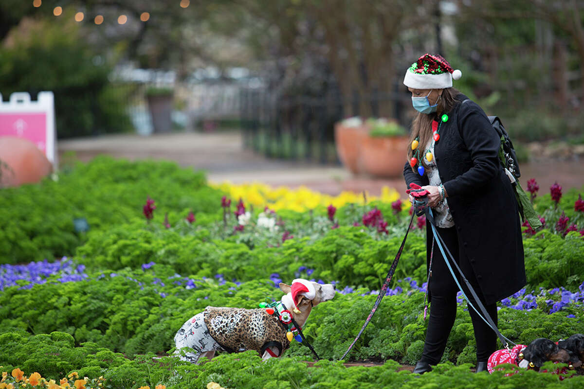 San Antonians dressed up their dogs in their best holiday attire and gathered at the San Antonio Botanical Garden's