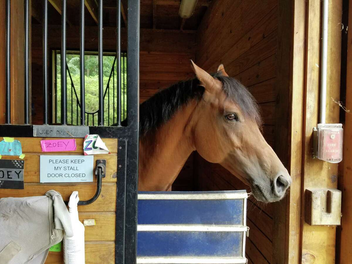 The New Canaan Mounted Troop at 22 Carter Street in New Canaan recently celebrated its 80th anniversary. Here is a list of ways to service programs, and organizations in the town through sales, donations and yearly efforts of contributions for good causes including the Mounted Troop's Annual Appeal.